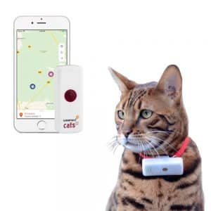 Application Weenect cats avec chat collier gps
