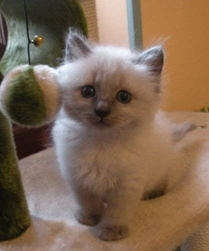Annonce Chaton A Donner Starnimo