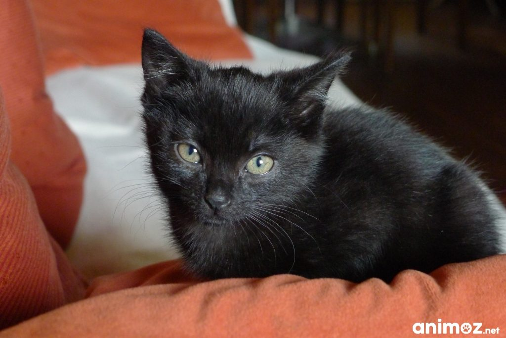 Chaton A Donner Moselle Starnimo
