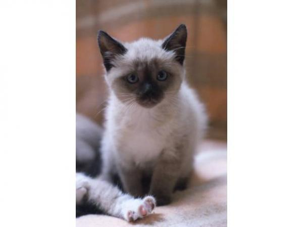 Chatons A Donner Bordeaux Starnimo