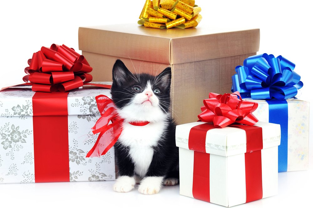 Tous les cadeaux pour moi